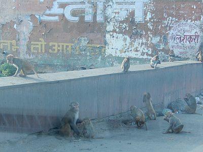 Affen in Agra_DSCN0467_a